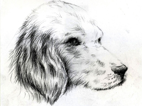 doggy sketch - Sketch For Kids