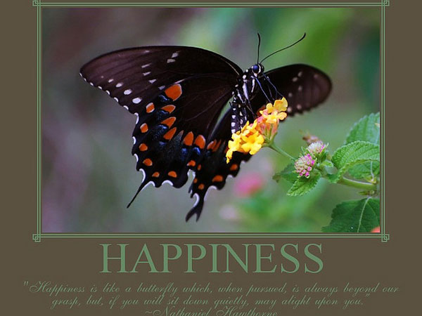 Happiness & Butterfly