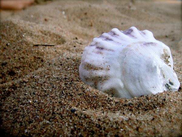 bluewhite 26 Memorable Seashell Pictures