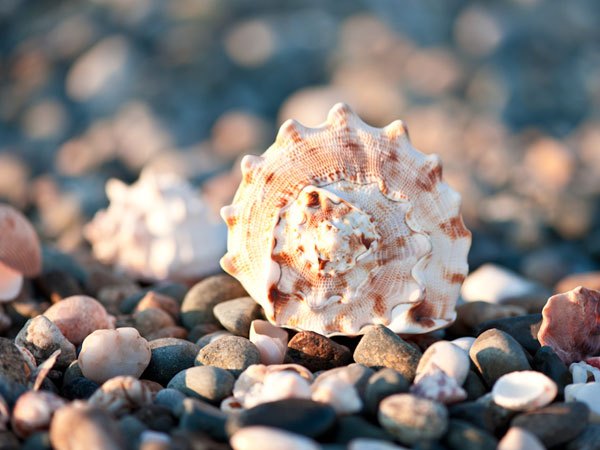 colorseasheal 26 Memorable Seashell Pictures