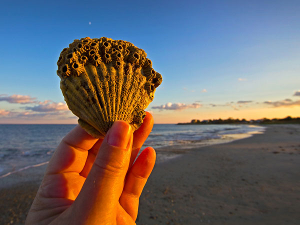 goldenhour 26 Memorable Seashell Pictures