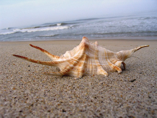 large 26 Memorable Seashell Pictures
