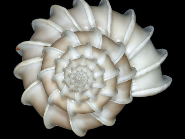 natures work 26 Memorable Seashell Pictures