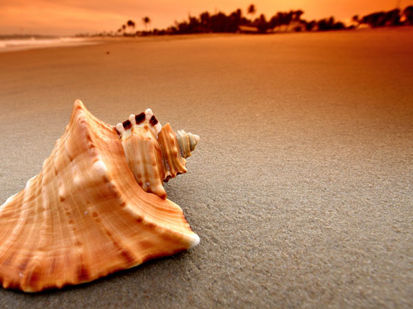 nicepics 26 Memorable Seashell Pictures
