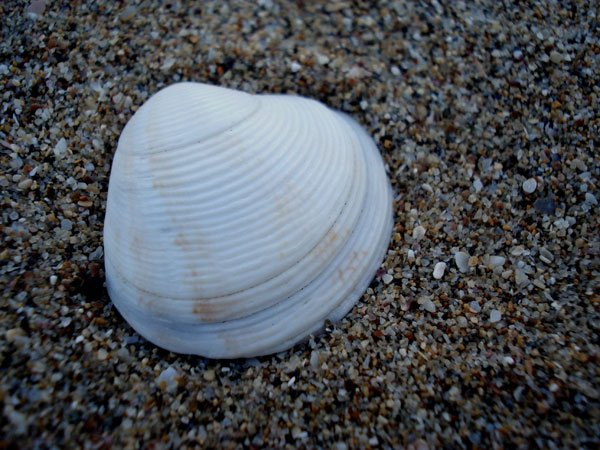 round 26 Memorable Seashell Pictures