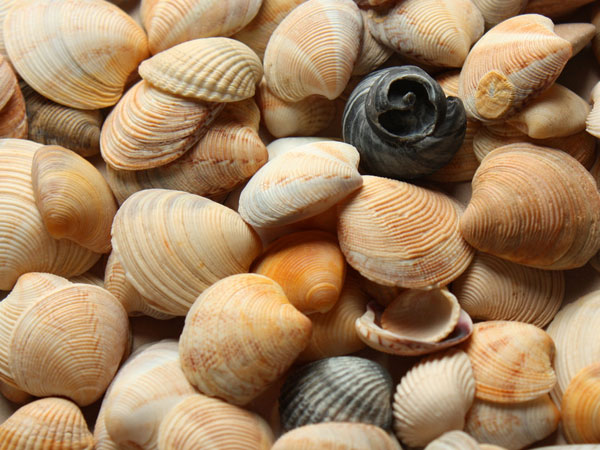sea pattern 26 Memorable Seashell Pictures