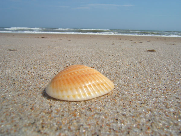 sheashell eye 26 Memorable Seashell Pictures