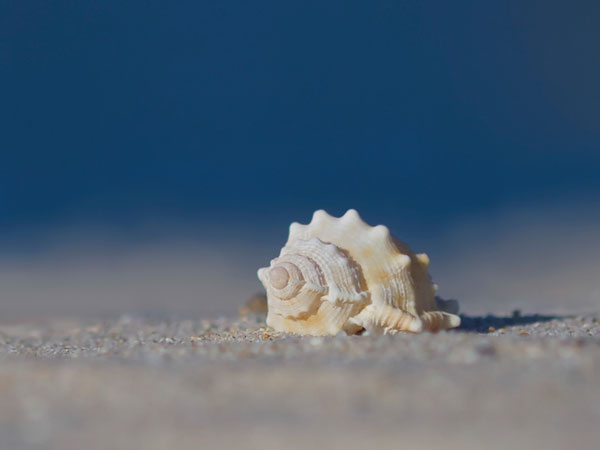 white 26 Memorable Seashell Pictures
