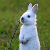23 Cute Bunny Pictures You Should Check Today