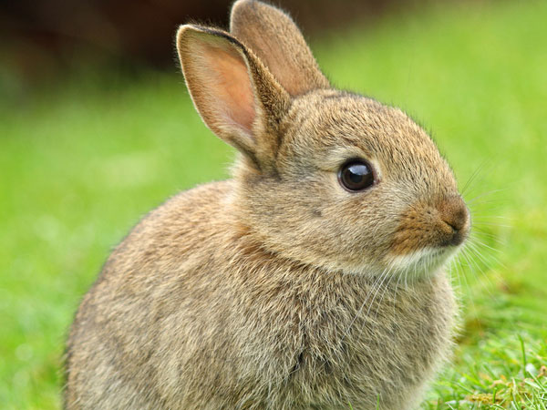 23 cute bunny pictures you should check today slodive