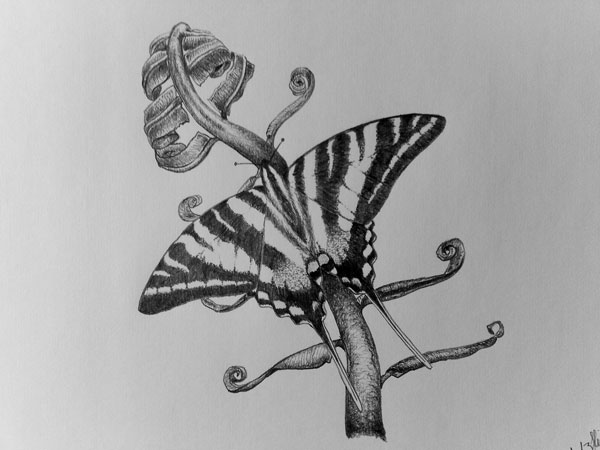 butterfly 34 Magical Tattoo Drawings