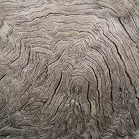 26 Helpful Wood Grain Texture Collection