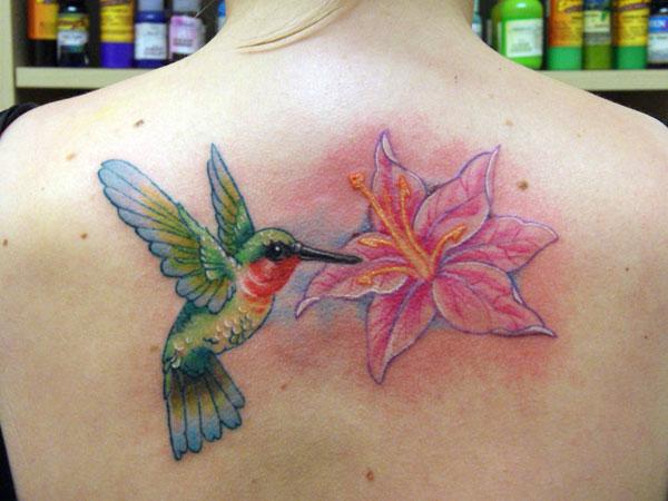 Pretty Hummingbird Near Pink Flower