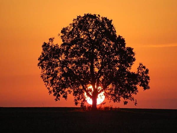 Sunset Through Tree