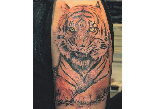 Sitting Up Tiger With Snarl Colored Tattoo