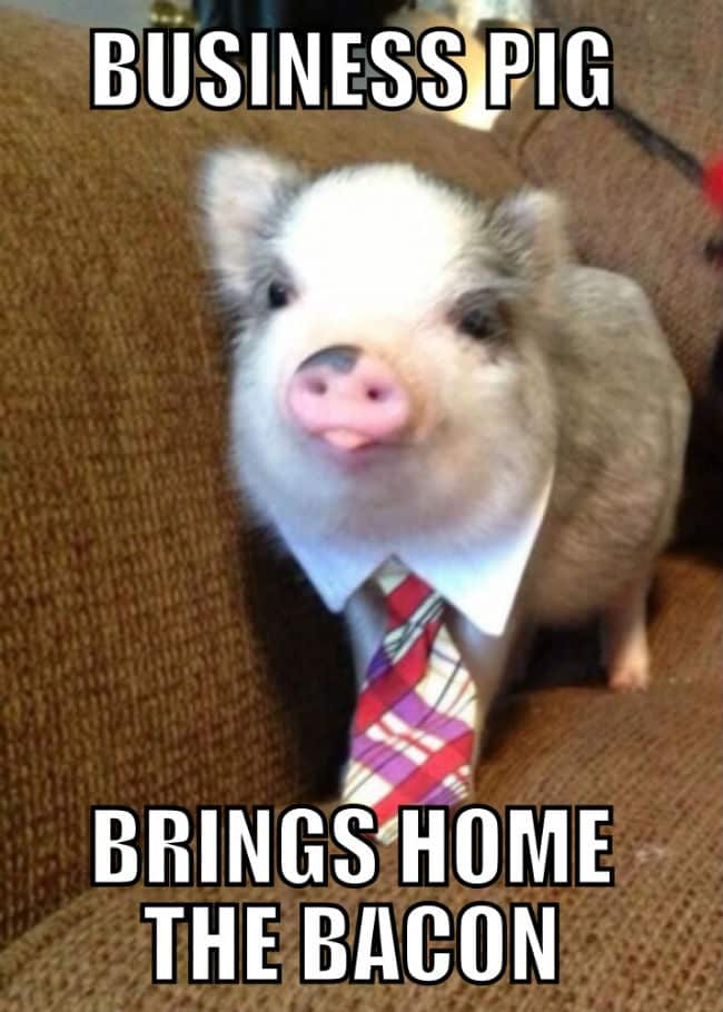 12 Pig Memes Sure To Put A Smile On Your Face